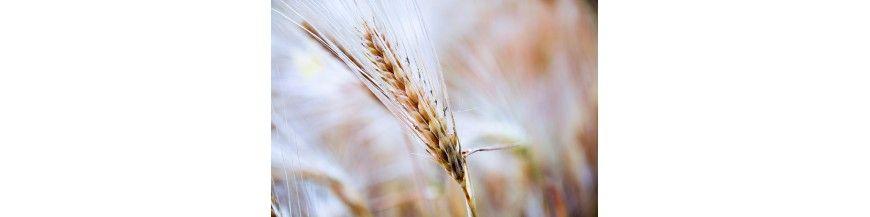 Cereales/Copos/Semillas